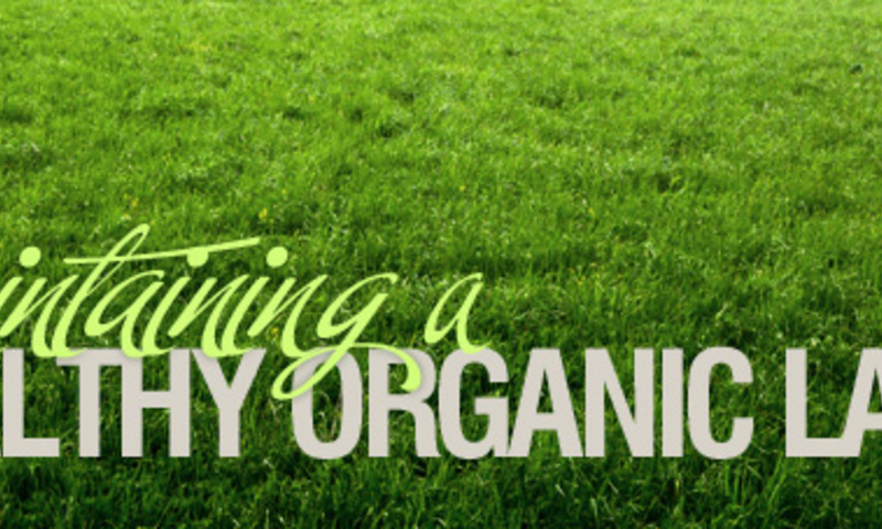 Maintaining a Healthy Organic Lawn