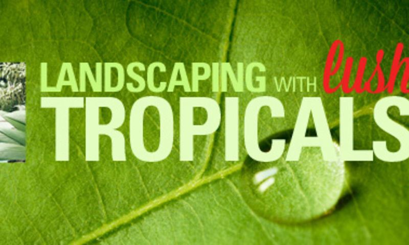 Landscaping with Lush Tropicals
